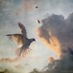 peace dove di Alice Popkorn